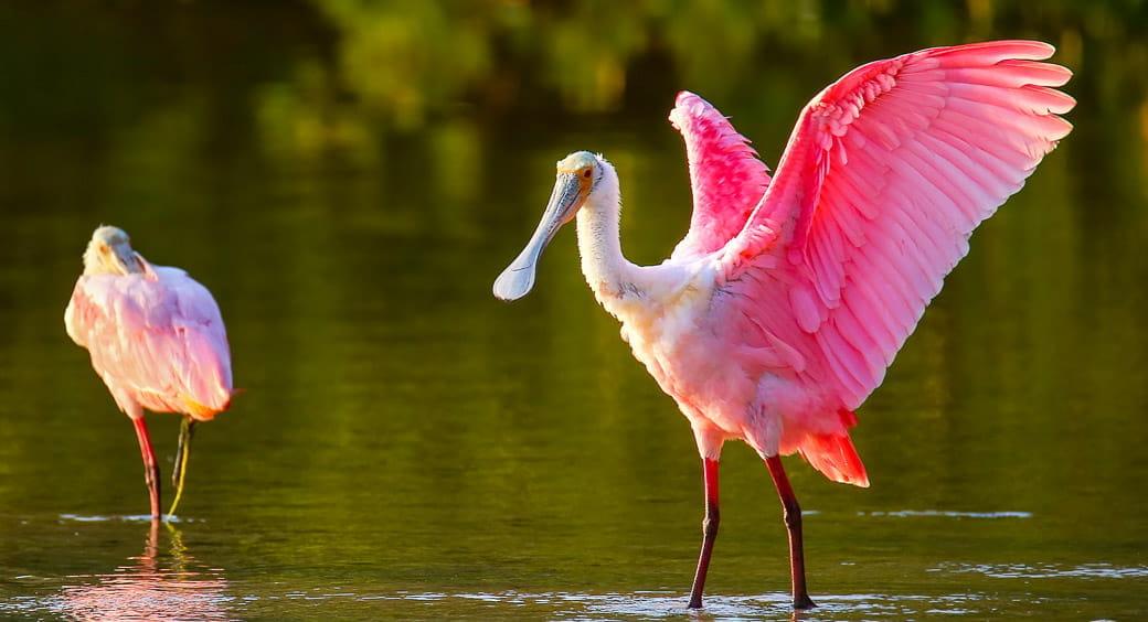 Alternative Bucket List Vacations - Wildlife of Sanibel