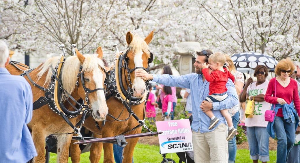 Cherry Blossom Festivals - International Cherry Blossom Festival