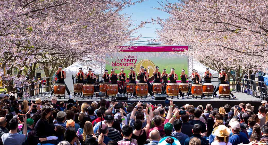 Cherry Blossom Festivals - Subaru Cherry Blossom Festival