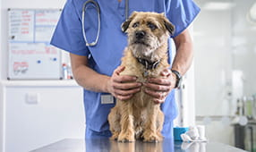 Small Dog Being Held by Veterinarian