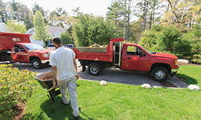 Landscaper moving mulch from a red truck