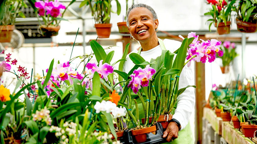 Senior woman working with orchids in a greenhouse