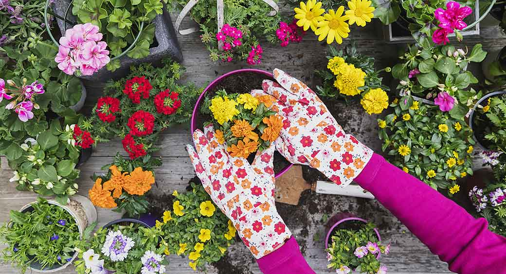 Magazines for Quarantine Hobbies - Woman Wearing Colorful Garden Glove Potting a Plant