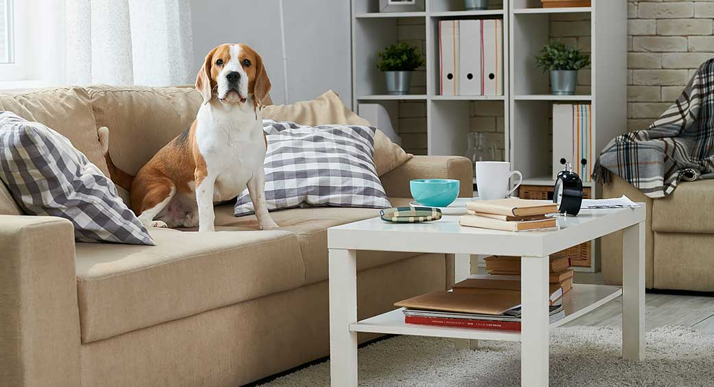 Magazines for Quarantine Hobbies - Dog Sitting on Sofa in a Living Room