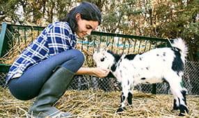 Woman Feeding Sheep