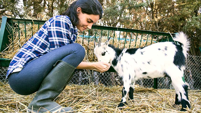 10 Unique Vacations Your Have to Take - Woman Feeding a Goat on a Farm