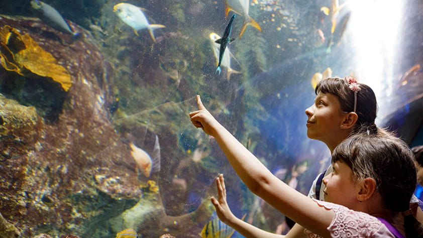 Children pointing at fish in a large aquarium display