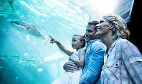 Couple Holding Daughter Pointing at Fish at an Aquarium