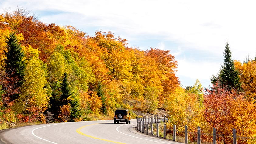 Jeep driving down a road in autumn surrounded by brightly colored trees