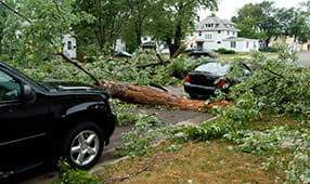 Downed Tree on Road Between Two Cars
