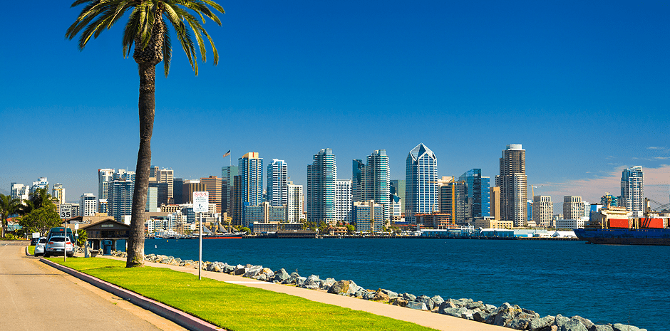 San Diego skyline with Palm Tree, Bay, and Blue Sky